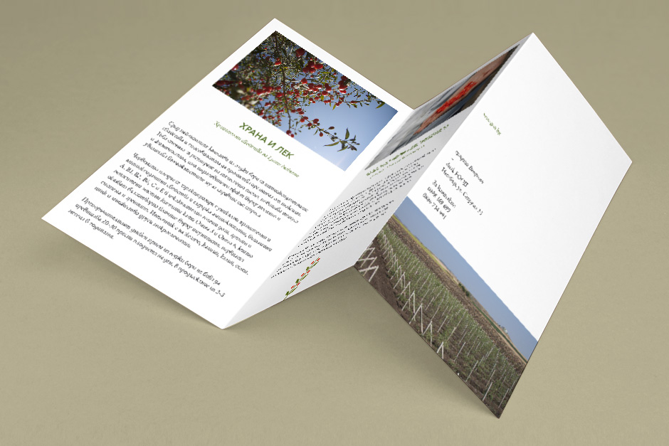 Leaflet for a goji berry producer